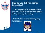 how do you tell if an animal has rabies1