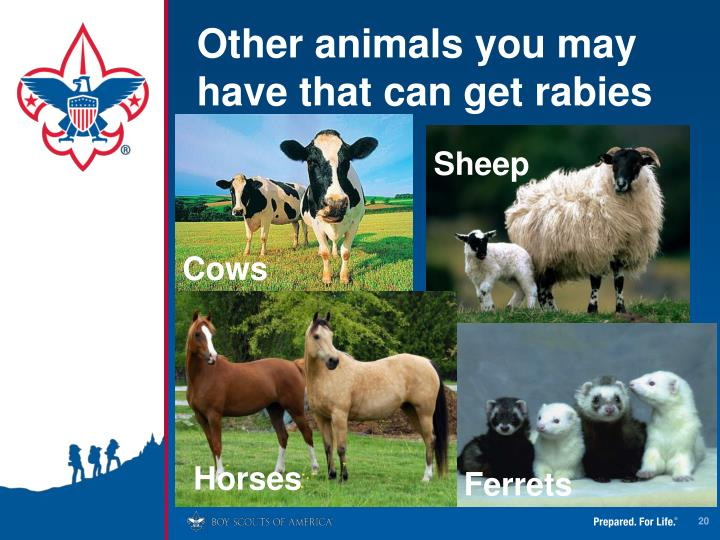 Other animals you may have that can get rabies