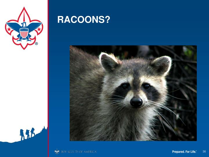 RACOONS?
