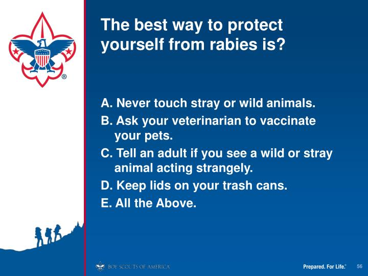 The best way to protect yourself from rabies is?