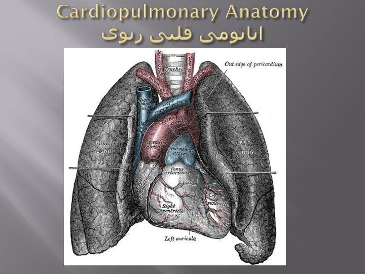 Cardiopulmonary Anatomy