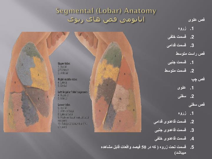 Segmental (Lobar) Anatomy