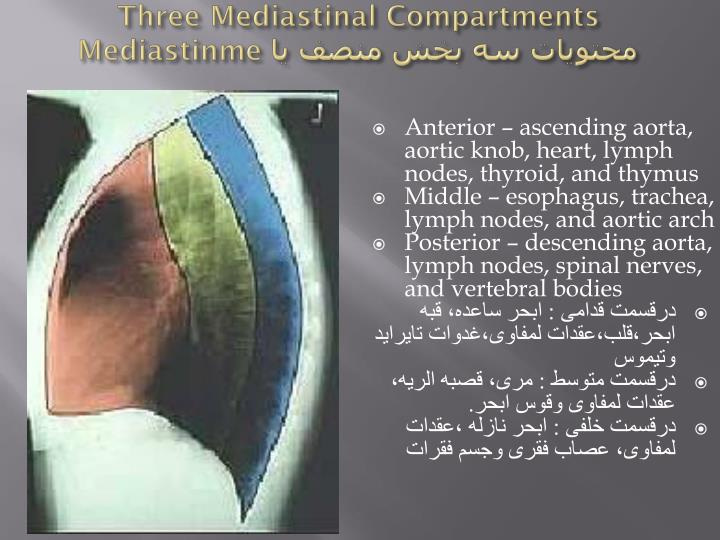 Three Mediastinal Compartments