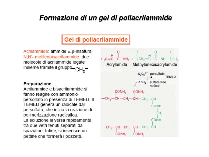 Formazione di un gel di poliacrilammide