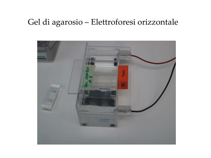 Gel di agarosio – Elettroforesi orizzontale
