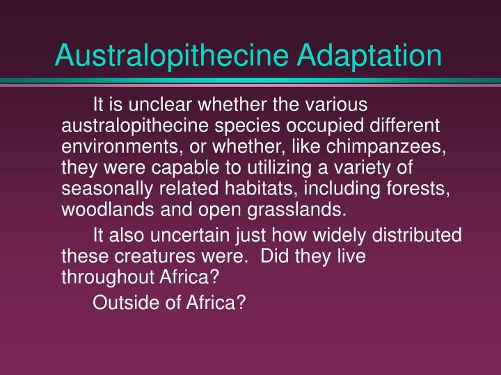 Australopithecine Adaptation
