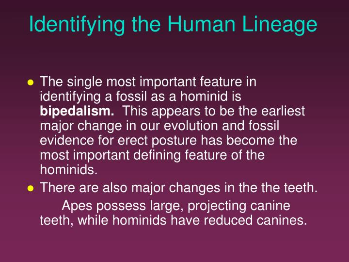 Identifying the Human Lineage