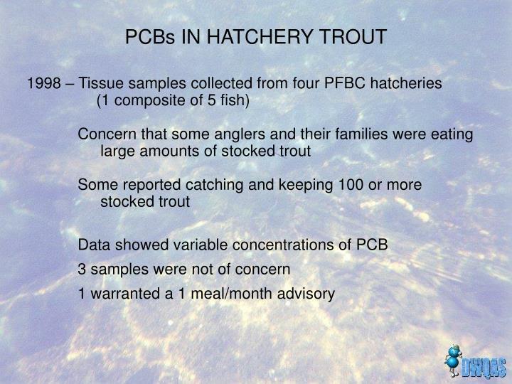 PCBs IN HATCHERY TROUT