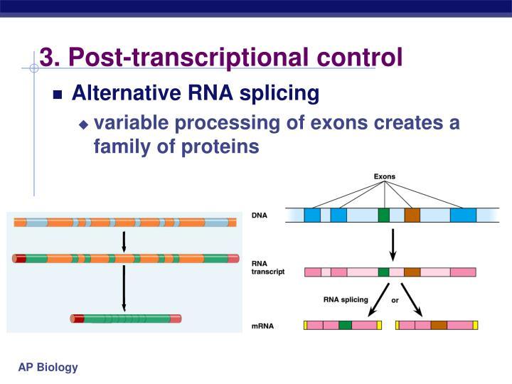 3. Post-transcriptional control