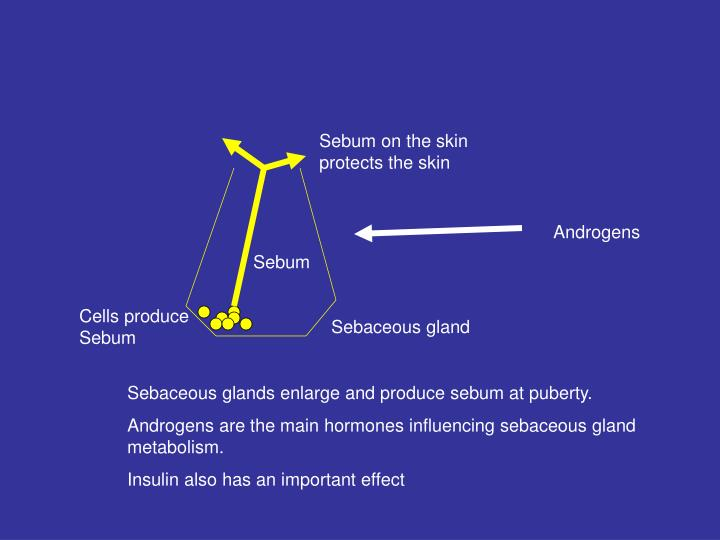 Sebum on the skin protects the skin