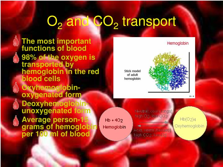 The most important functions of blood