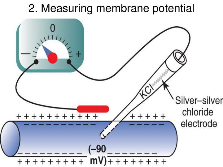 2. Measuring membrane potential