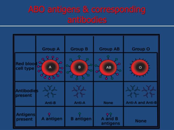 ABO antigens & corresponding antibodies