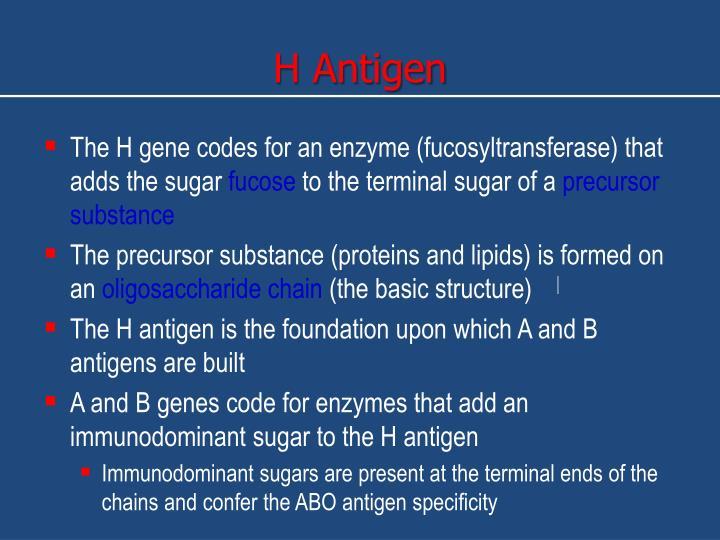 H Antigen