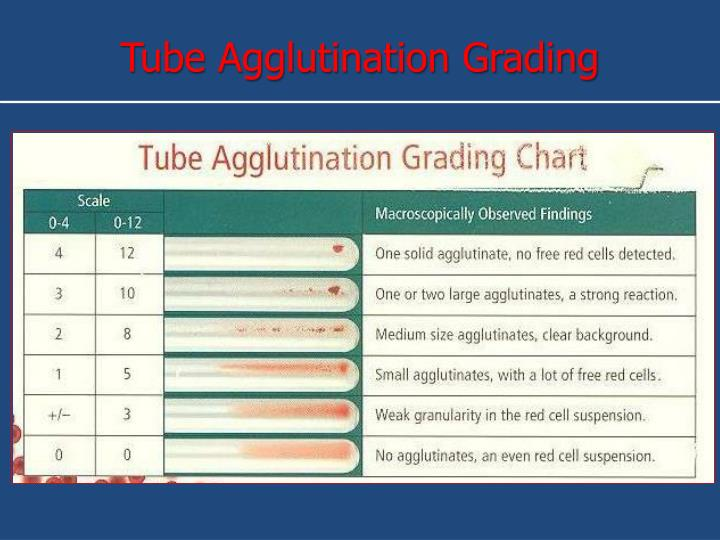 Tube Agglutination Grading