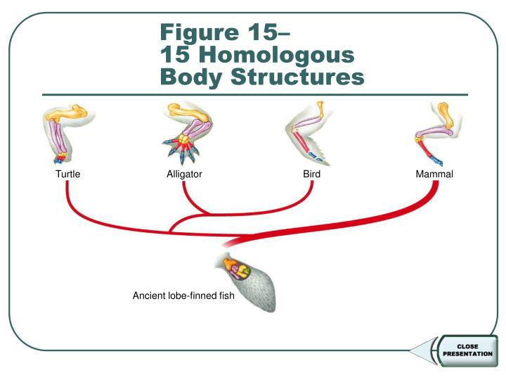 Figure 15–15 Homologous Body Structures