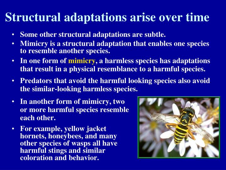 PPT - Biology 1 Notes Chapter 15 (pages 368-386) Darwin ...