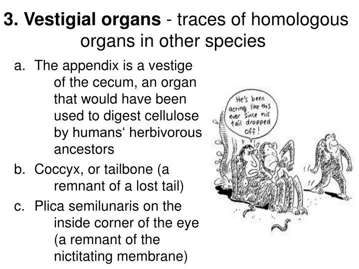 3. Vestigial organs