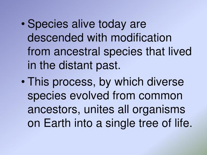 Species alive today are descended with modification from ancestral species that lived in the distant past.