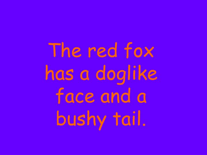 The red fox has a doglike face and a bushy tail.