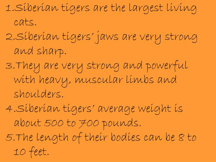 1.Siberian tigers are the largest living cats.