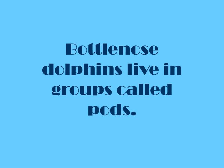 Bottlenose dolphins live in groups called pods.