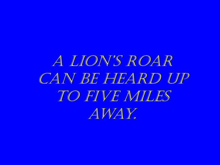A lion's roar can be heard up to five miles away.