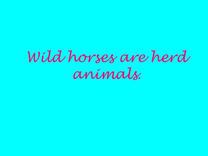 Wild horses are herd animals
