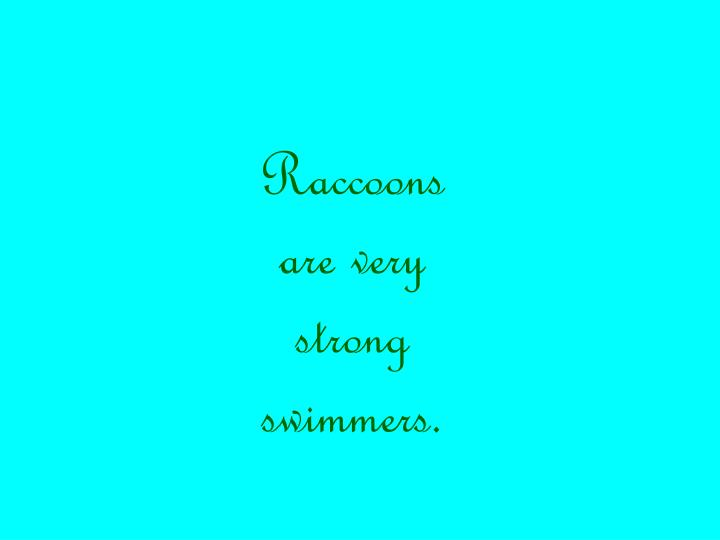 Raccoons are very strong swimmers.