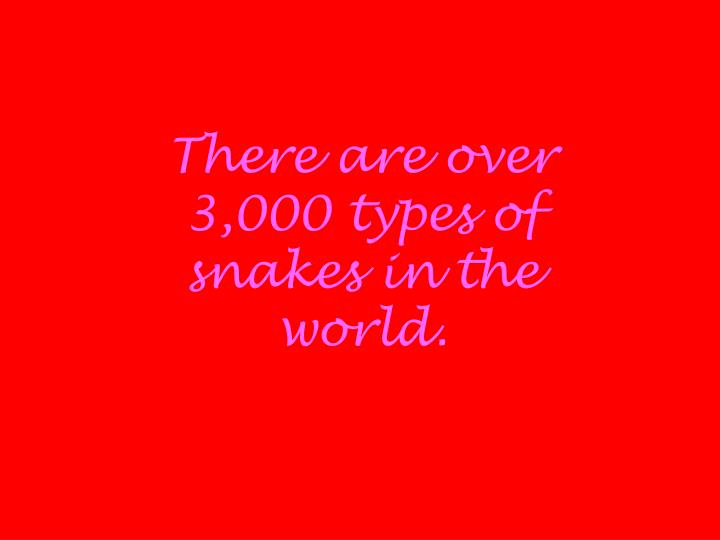 There are over 3,000 types of snakes in the world.