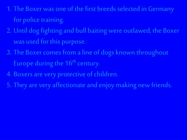 The Boxer was one of the first breeds selected in Germany for police training.