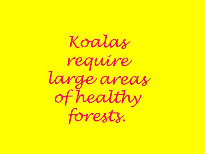 Koalas require large areas of healthy forests.