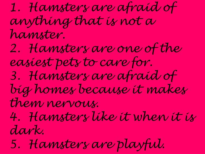 1.  Hamsters are afraid of anything that is not a hamster.
