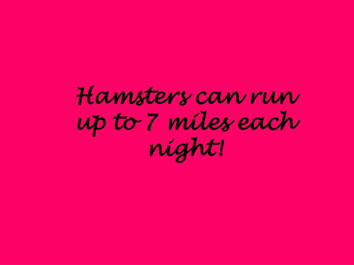 Hamsters can run up to 7 miles each night!