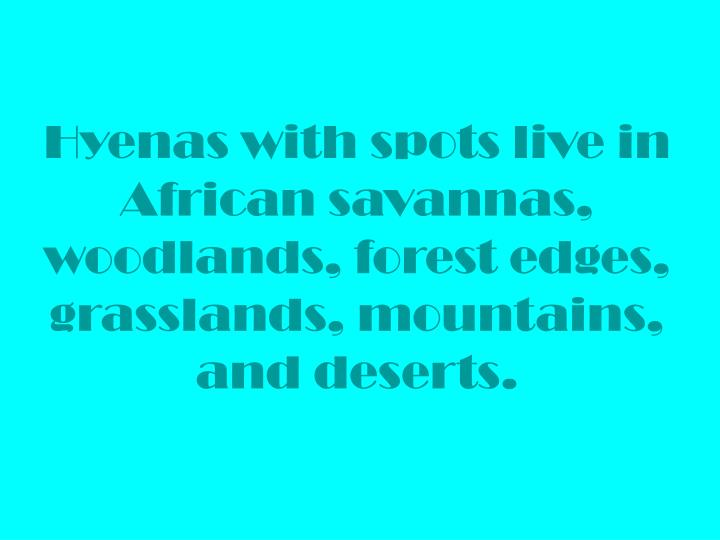 Hyenas with spots live in African savannas, woodlands, forest edges, grasslands, mountains, and deserts.