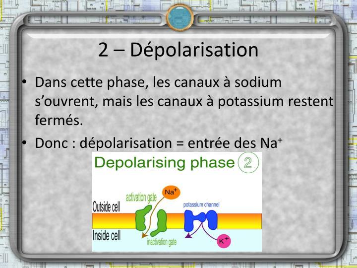 2 – Dépolarisation
