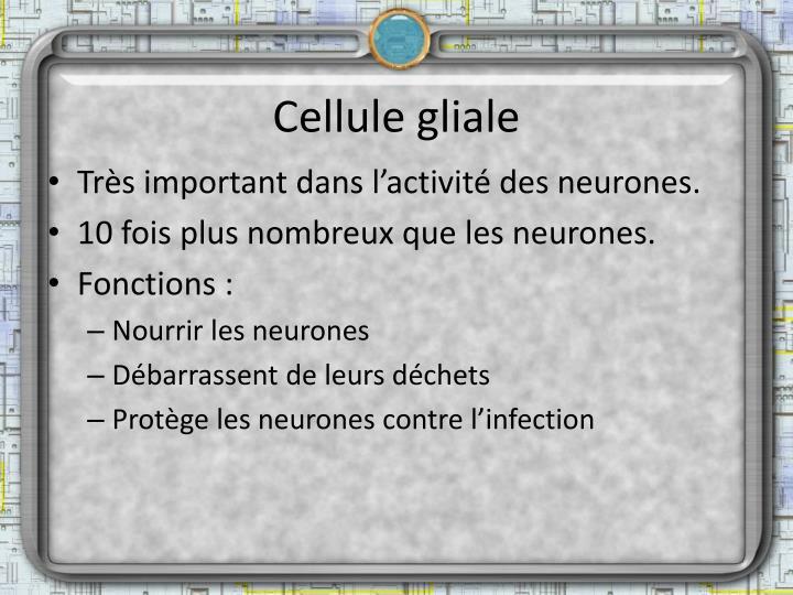 Cellule gliale