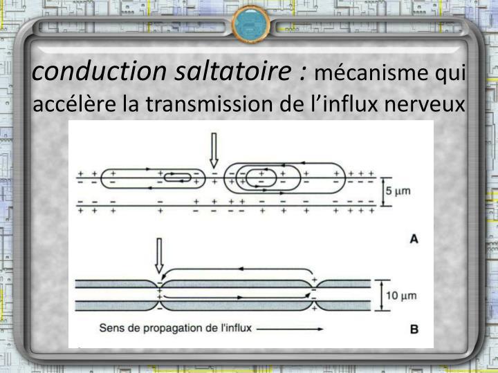 conduction saltatoire :