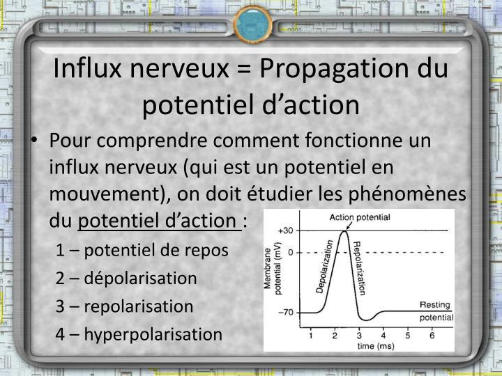 Ppt tissu nerveux powerpoint presentation id 5435659 for Influx nerveux