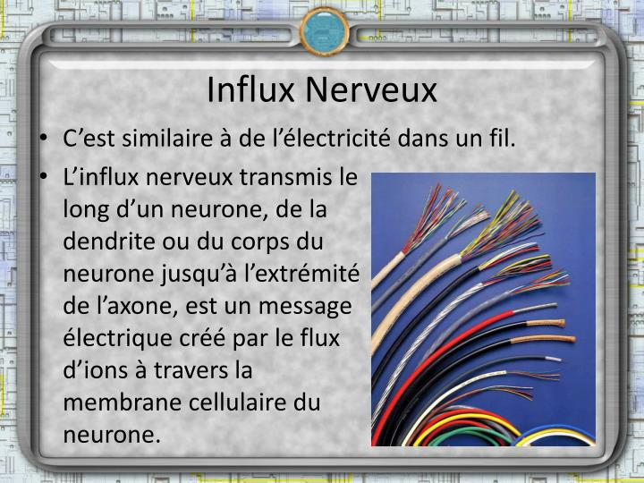 Influx Nerveux