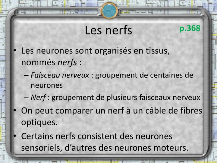 Les nerfs