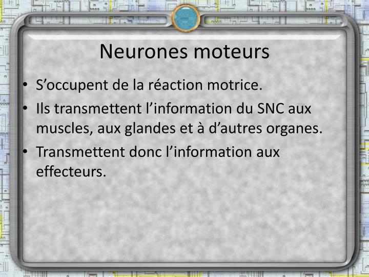Neurones moteurs