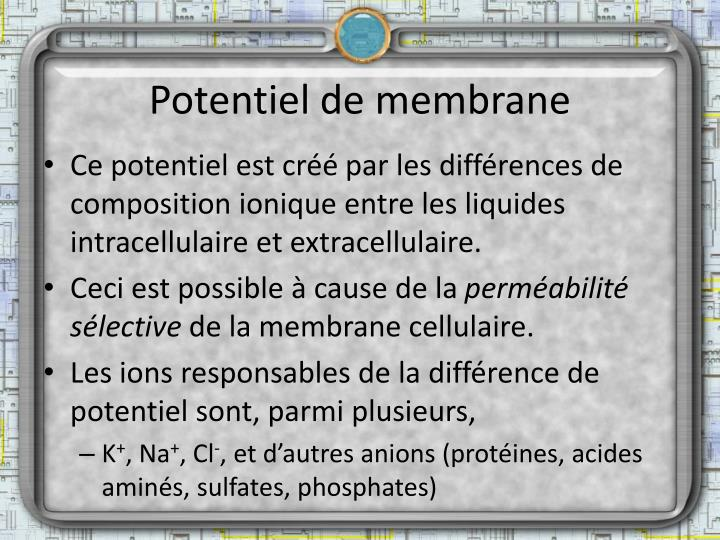 Potentiel de membrane