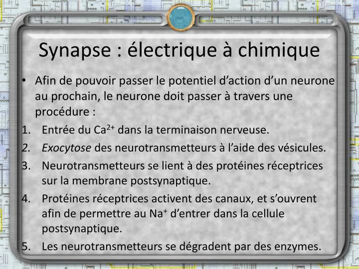 Synapse : électrique à chimique