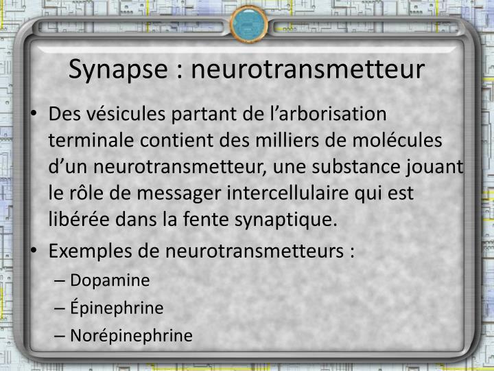 Synapse : neurotransmetteur