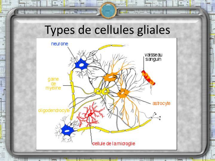 Types de cellules gliales