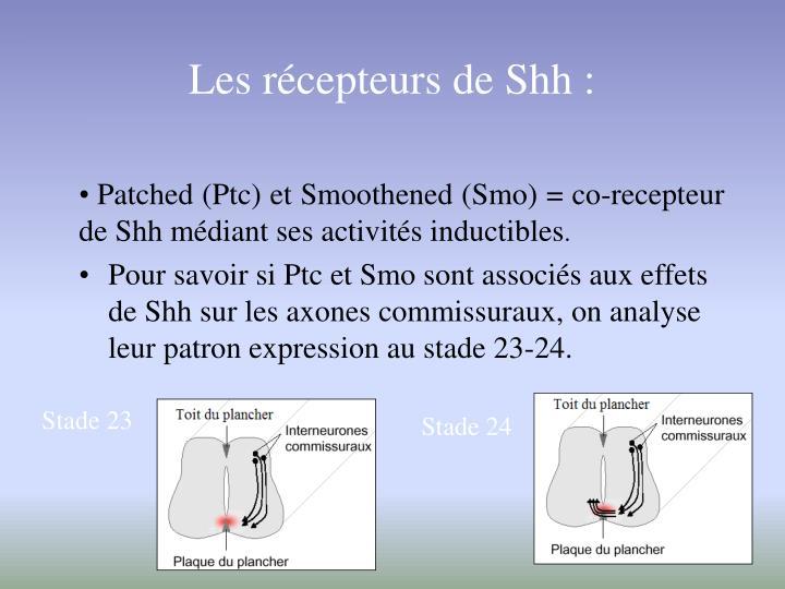 Les récepteurs de Shh :