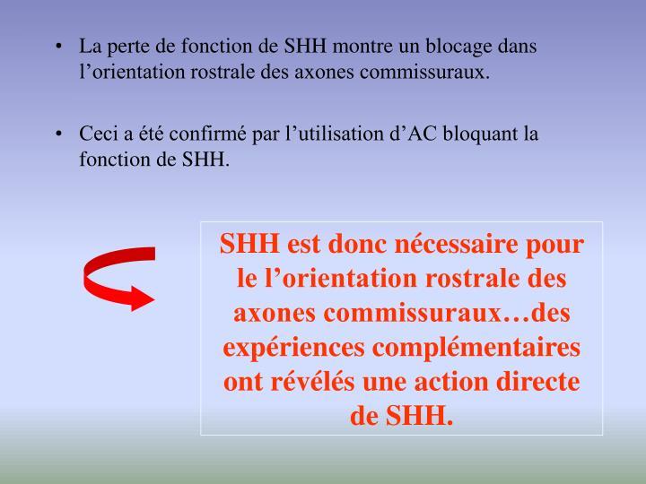 La perte de fonction de SHH montre un blocage dans l'orientation rostrale des axones commissuraux.