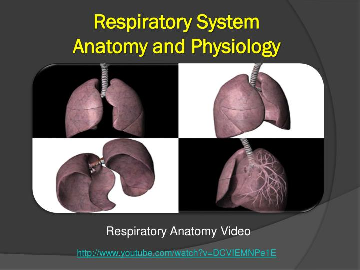 Respiratoryanatomy Power Point: ASSESSMENT OF THE RESPIRATORY SYSTEM PowerPoint