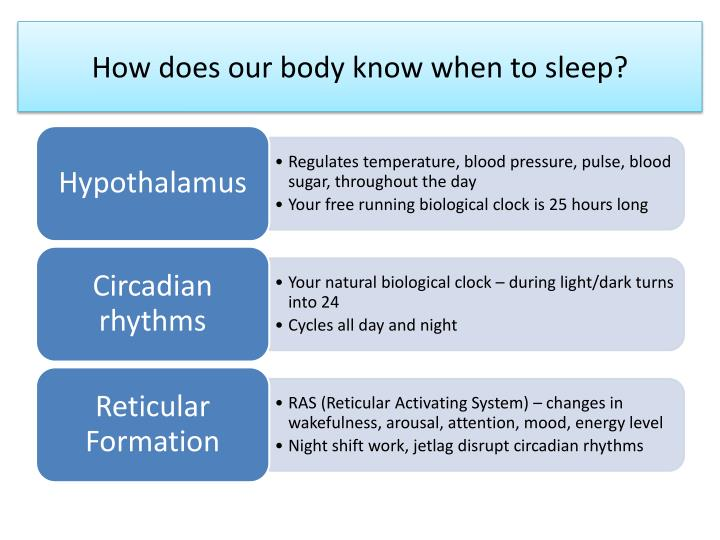 How does our body know when to sleep?